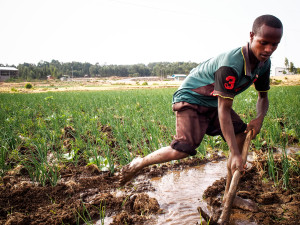 Berhanu Gebru viljelee sipulia ja valkosipulia isänsä kanssa Gonderissa.